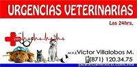 Médicos Veterinarios Zootecnistas-URGENCIAS-VETERINARIAS-TORREON-24-HRS-en-Coahuila-encuentralos-en-Sección-Amarilla-PLA