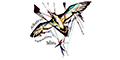 Deportes Extremos-ALBATROS-PARACAIDISMO-en-Morelos-encuentralos-en-Sección-Amarilla-BRP